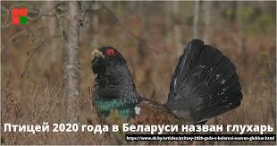 О проведении областной экологической акции «Поддержим птиц!»