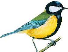 ИТОГИ коллективного творческого дела «Птичье рандеву»