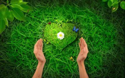 УСЛОВИЯ проведения областного этапа республиканского конкурса по благоустройству и озеленению территорий «Украсим Беларусь цветами»